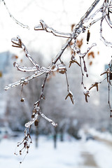 Ice Storm photo by Magnum_Dynalab (Mike)