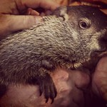 Groundhog Phil says we have 6 more weeks of winter. What do you think? #wishfulthinking stay a while #oldmanwinter