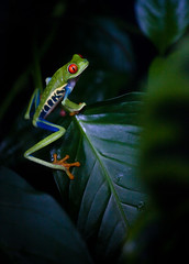 Costa Rica - Frog photo by Cyrielle Beaubois