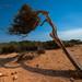 Ibiza - La fuerza del viento