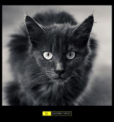 Hypnoticat photo by Sandro Vinci