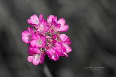 Coloursplash - (Explore) photo by nemi1968