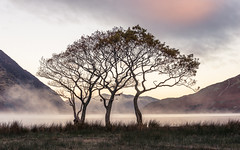 Crummock Trees LPOTY 2014 Classic View runner up photo by colinbell.photography