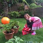 Potting the strawberrys<br/>09 Jul 2016