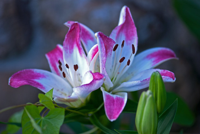 Fotos Flores Preciosas Decoracin Del Hogar Prosalocom