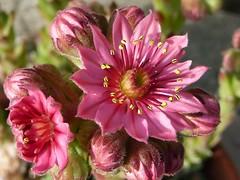 Flower photo by gilloogo