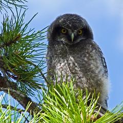 Gotta love those owls photo by annkelliott