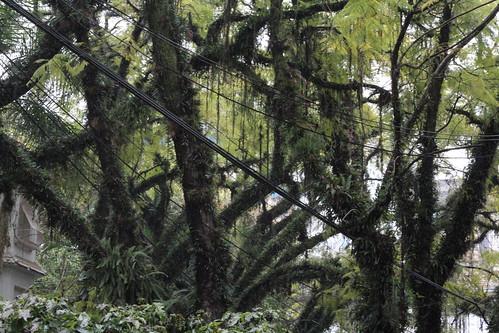 Amazing moss in Porto Alegre