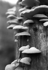 Mushrooms photo by Jonas.Nilsson