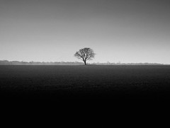 Landscape with Tree photo by The Nick Page