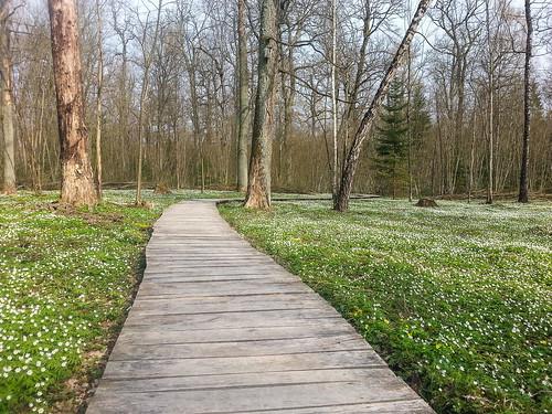 Pavasarios takas