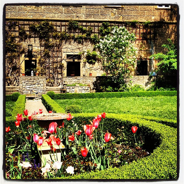Der weisse Flieder blüht im Schlossgarten