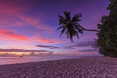 Palmtree on the beach at sunset - La Digue Seychelles photo by lathuy