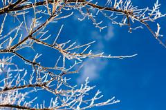 Frozen photo by seanjonesfoto