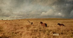 landscape with horses and standing stones photo by a.c.thomas
