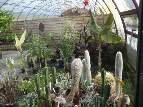 Cactus Variés