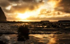 Sunrise Urchin photo by Puresilk Images (AWAY)