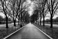 Washington DC: Path Along Reflecting Pool photo by Photography by Carlos Martin