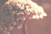10152234283_31ceaee38c_t