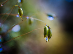 A Cool, Damp Morning photo by Don White (Burnaby) Thanks for the Million Views
