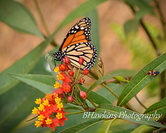 Chasing Butterflies photo by BHawk Photography