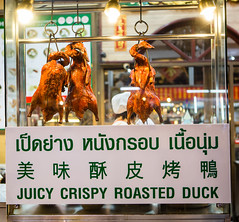 Rost duck photo by Bugphai ;-)