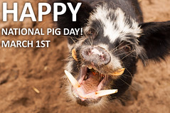 It's National Pig Day! photo by CarbonNYC [in SF!]