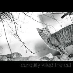 curiosity killed the cat photo by s.f.p.