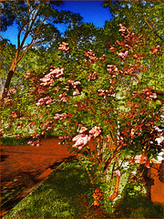 Garden Blossoms in Red Gold With Cobble Stones photo by Tim Noonan