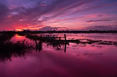 Purple Patch (Portadown) explored photo by Alistair Prentice.