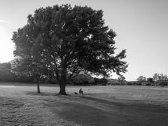 David Beck - photo by David.Beck