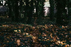 21.10.2013_Jewish_cementery_Autumn_1part-70.jpg photo by Churechawa
