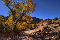 ZION NATIONAL PARK photo by MERLIN08