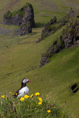 Puffin photo by Harpa Hrund