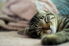 Cat Nap photo by Tim_Rowe