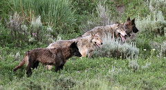 The Lamar Canyon Pack photo by gainesp2003