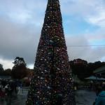 Big Christmas tree<br/>09 Nov 2013