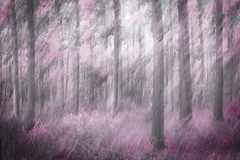 Pinker Shade of Grey - Explored... photo by rosejones1uk