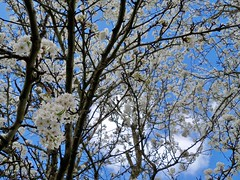 Spring in Vancouver Washington photo by trins