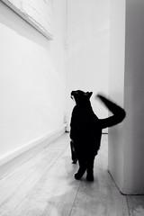 Ziggy aime l'art ... photo by mano8