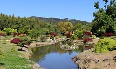 Bambouseraie. Le jardin du dragon3 photo by Tinou61
