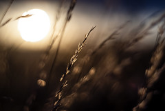Sunset through the grass photo by Raven Photography by Jenna Goodwin