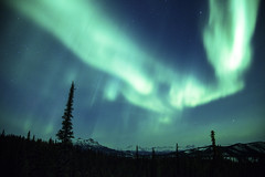 Northern Lights Over Denali photo by Critter Seeker