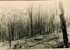 BM 4- 1945 - Illwald janv 45