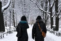 Zimowy spacer photo by bazylek100