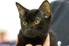 Beautiful cat photo by Thad Zajdowicz (Thanks for 2 million+ views!)