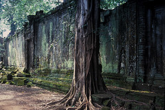 Ta Prohm - Tree in Front of Wall (Explored 4 okt 2013, #127) photo by Drriss & Marrionn