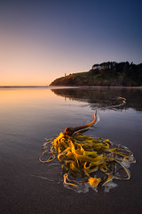 Kelp and the Lighthouse photo by Michael Riffle