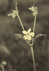 Flower and buds photo by Eduardo Estéllez