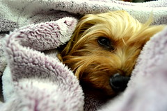 Pereza 33/365 photo by AnDreamers